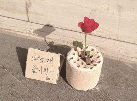 3.뜨거울 때 꽃이 핀다
